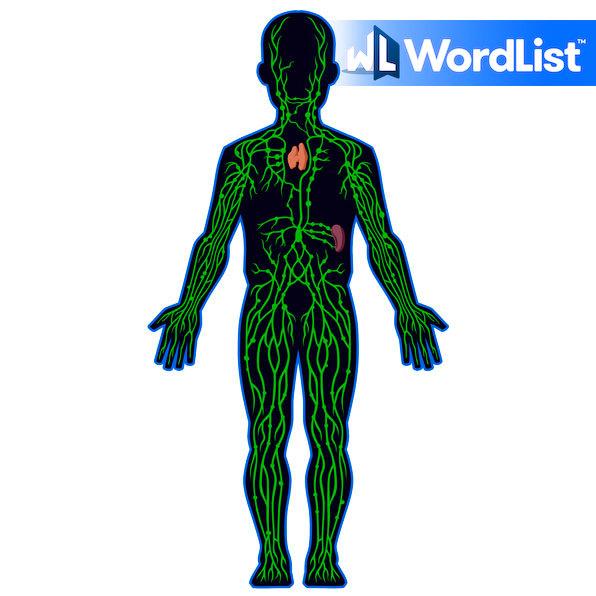 (N) Lymphatic System