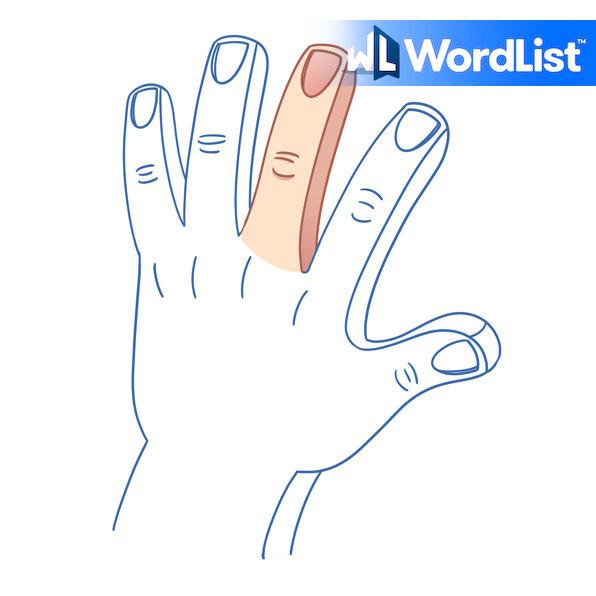 dedo cordial