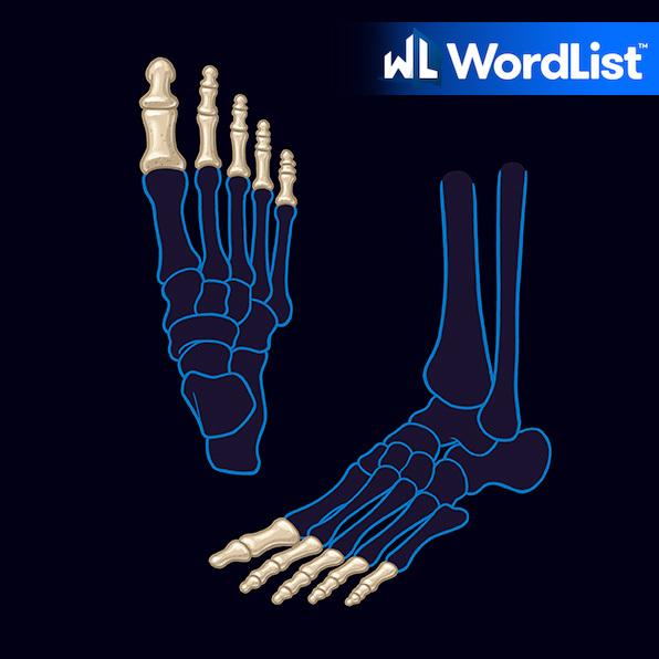 phalanx bone